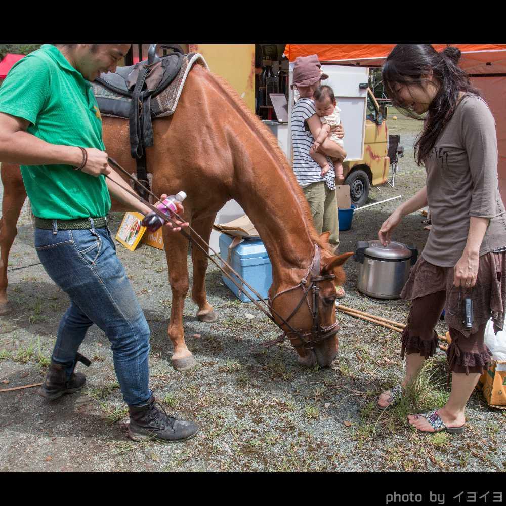 オバケンゾンビキャンプの馬